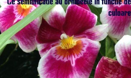 Ce semnificatie au orhideele in functie de culoare