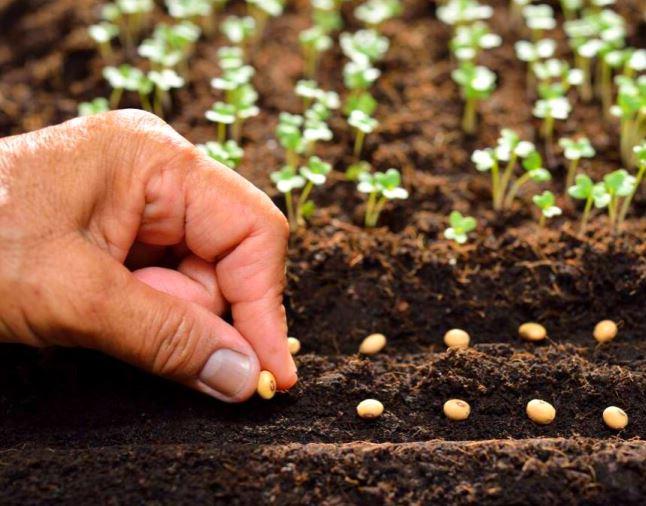 Reguli de baza pentru cultivarea rasadurilor